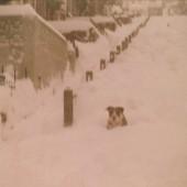 Snow Scene in Ash Grove,Tyllwyn.