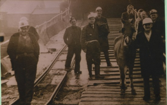 The last pit pony at Marine Colliery